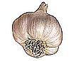 garlic-100x86